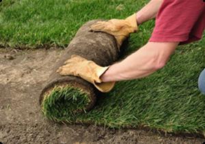 San Antonio Landscaping Services